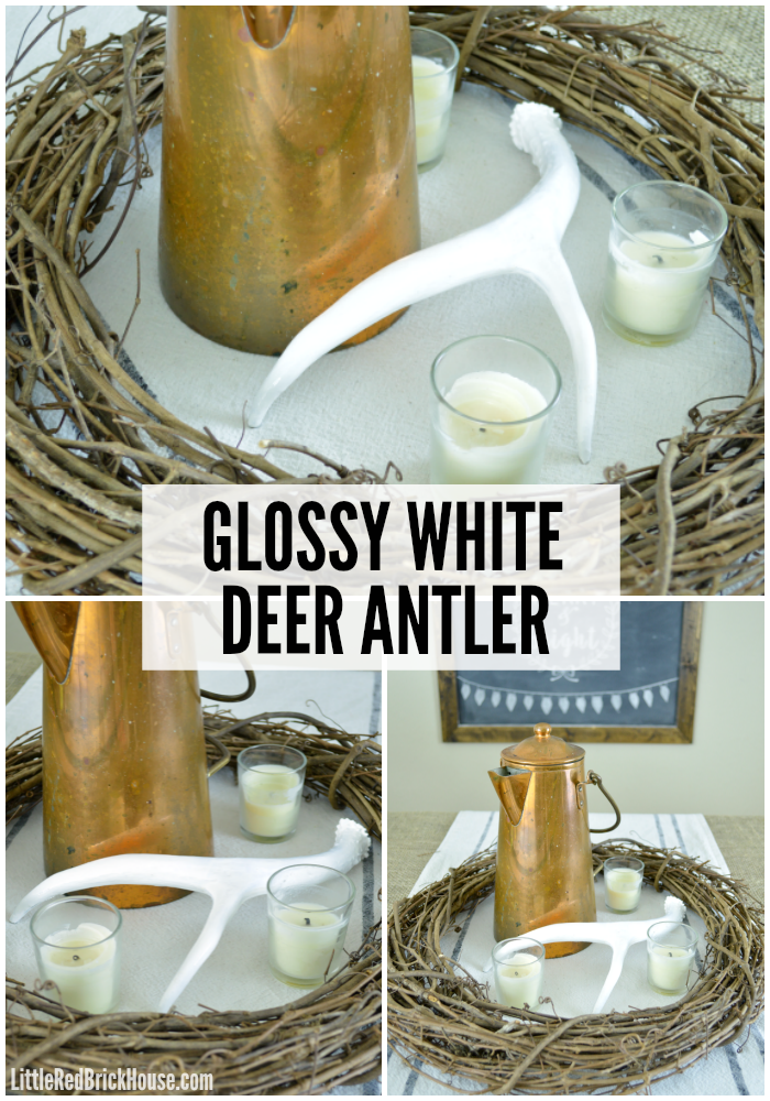 Glossy White Deer Antler | LITTLE RED BRICK HOUSE